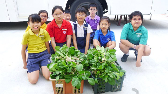 Hydroponic Garden 2011 with KCPPS